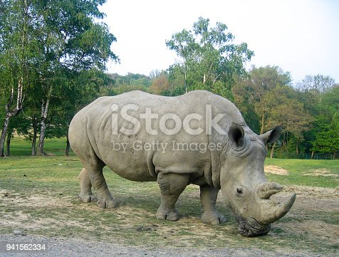 Complete figure of a rhinoceros