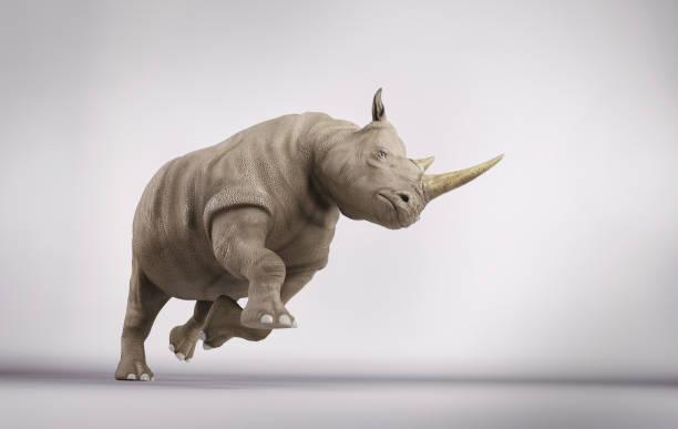 Rhinoceros in attack position in studio. 3d render stock photo