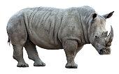 istock rhinoceros on white background 497537400