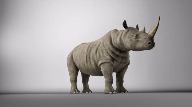 Rhinoceros posing in a photography studio. 3d render Rhinoceros posing in a photography studio. 3d render rhinoceros stock pictures, royalty-free photos & images