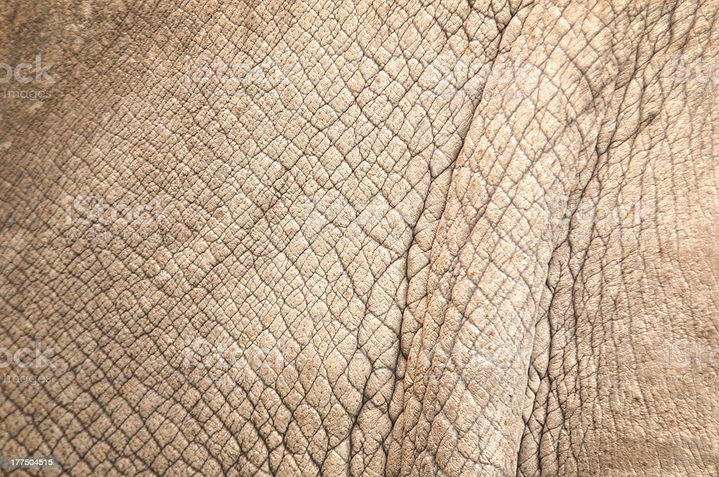 rhinoceros skin royalty-free stock photo