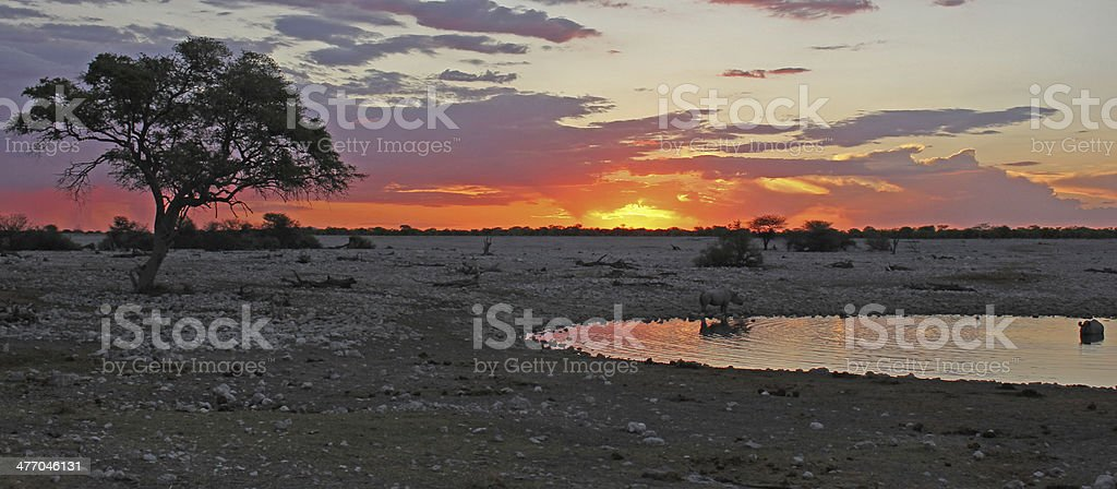 Rhinos at Sunset royalty-free stock photo