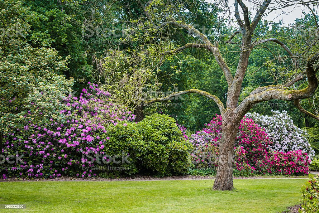 Rhododendron Flowers in a public park foto