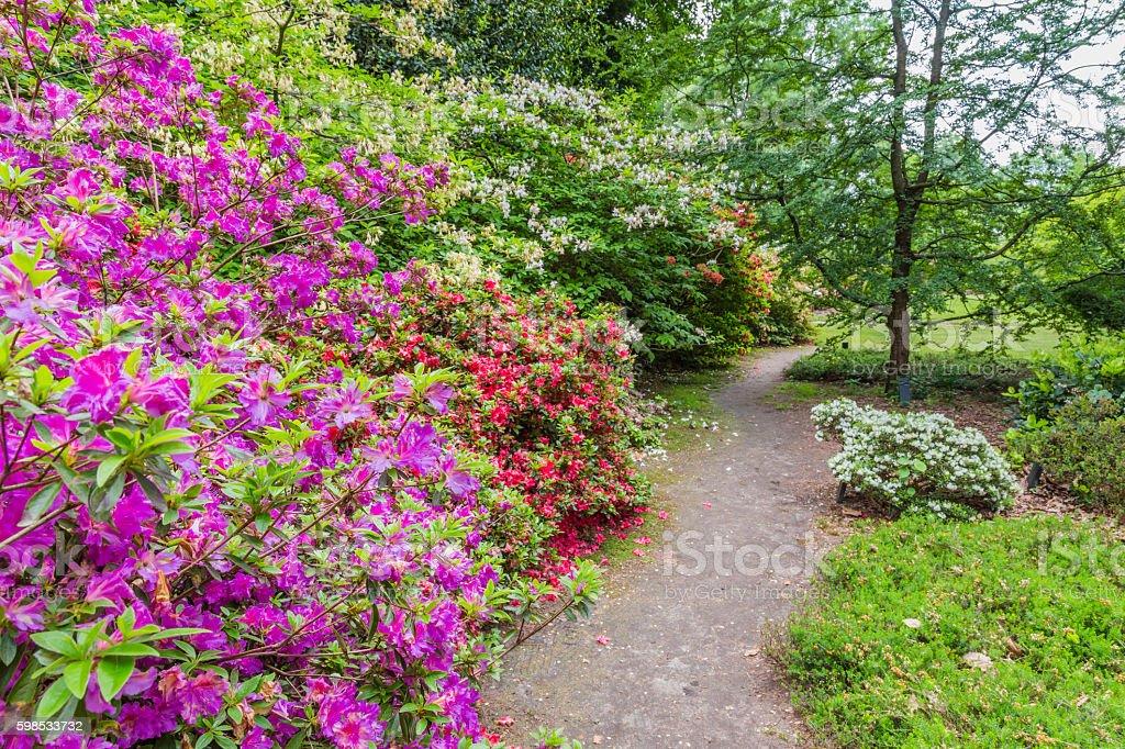 Rhododendron Flowers in a public park photo libre de droits