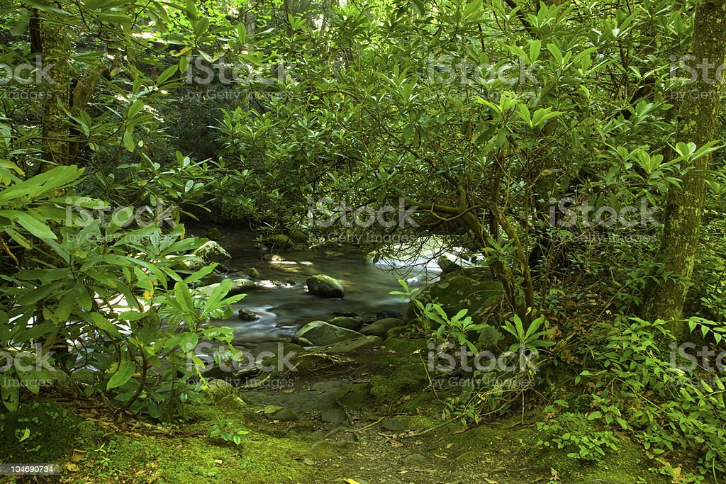 Rhododendron, Greenbrier Area, Great Smoky Mtns stock photo