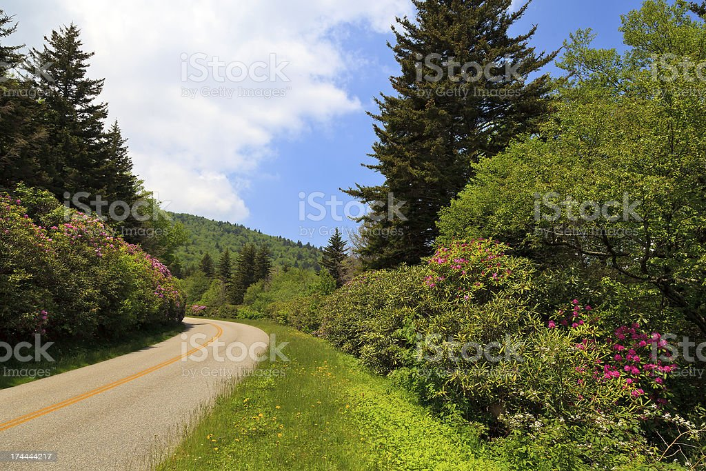 Rhododendron in Bloom Beside the Parkway stock photo