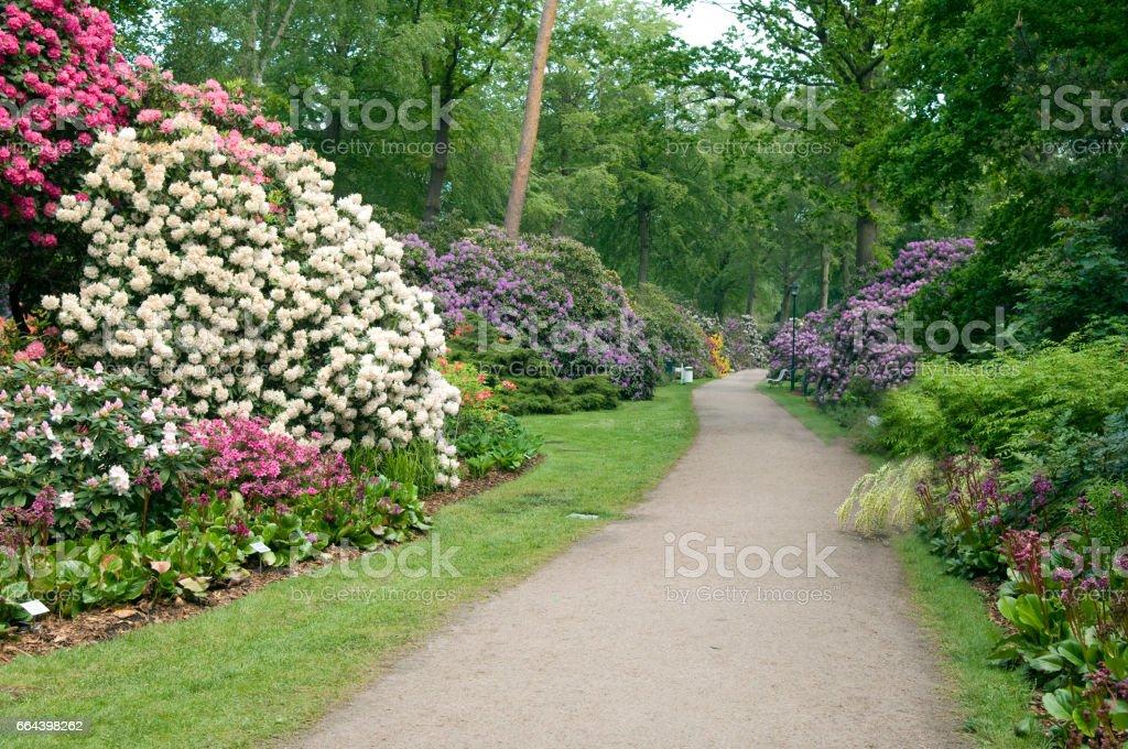 Rhododendron; Park; bunte – Foto