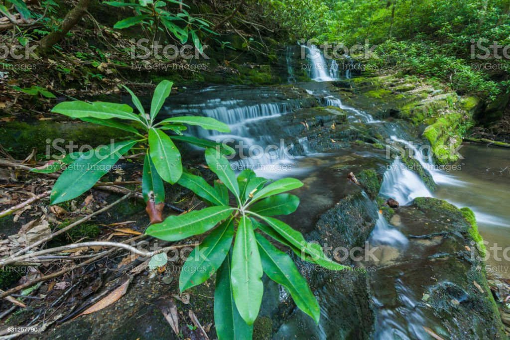 Rhododendron & Waterfalls, Greenbrier, Great Smoky Mountains stock photo