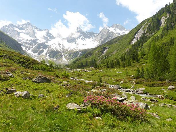 Rhododendren und mountain stream mit glacier im Hintergrund – Foto