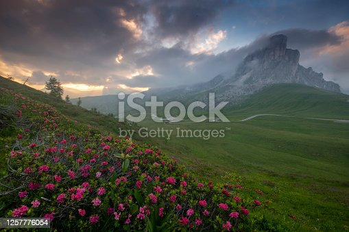 istock rhododendrons in bloom at Passo Giau at sunset with mount nuvolao on the background , Dolomites Italy 1257776054