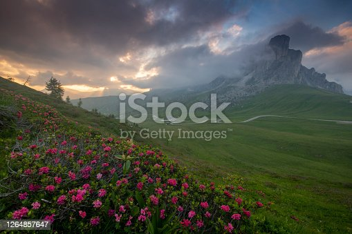 istock rhododendrons in bloom at Passo Giau at sunset with mount nuvolao on the background , Dolomites Italy 1264857647