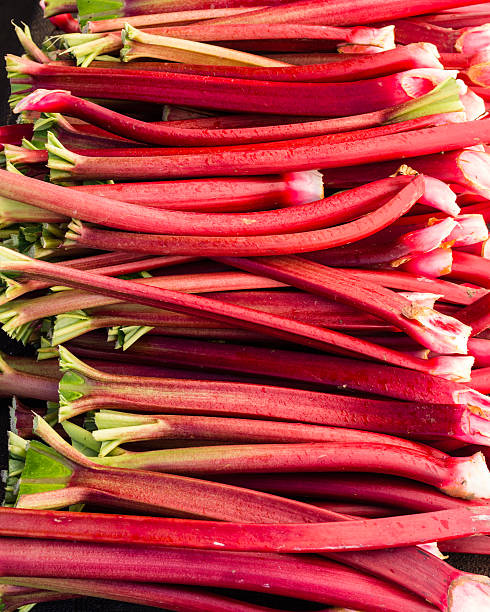 Rhubarb stems harvested ready to eat stock photo