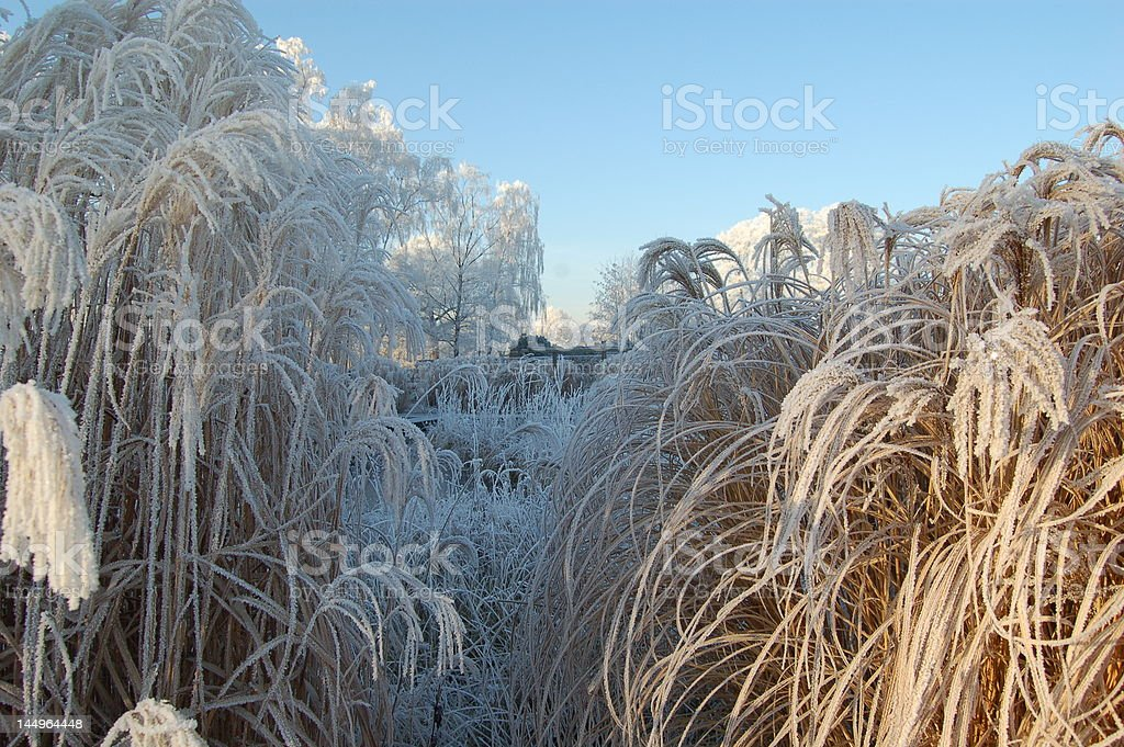 rime stock photo