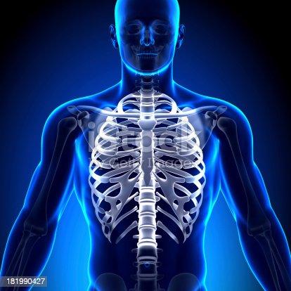 Brustkorb Brustbeinanatomie Knochen Stock-Fotografie und mehr Bilder ...