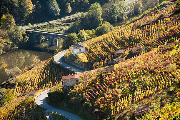 Ribeira sacra vineyards and river Miño, Galicia, Spain. Ribeira sacra is a beautiful wine making location area in Lugo and Ourense provinces, Galicia, Spain, at the banks of river Miño. galicia stock pictures, royalty-free photos & images