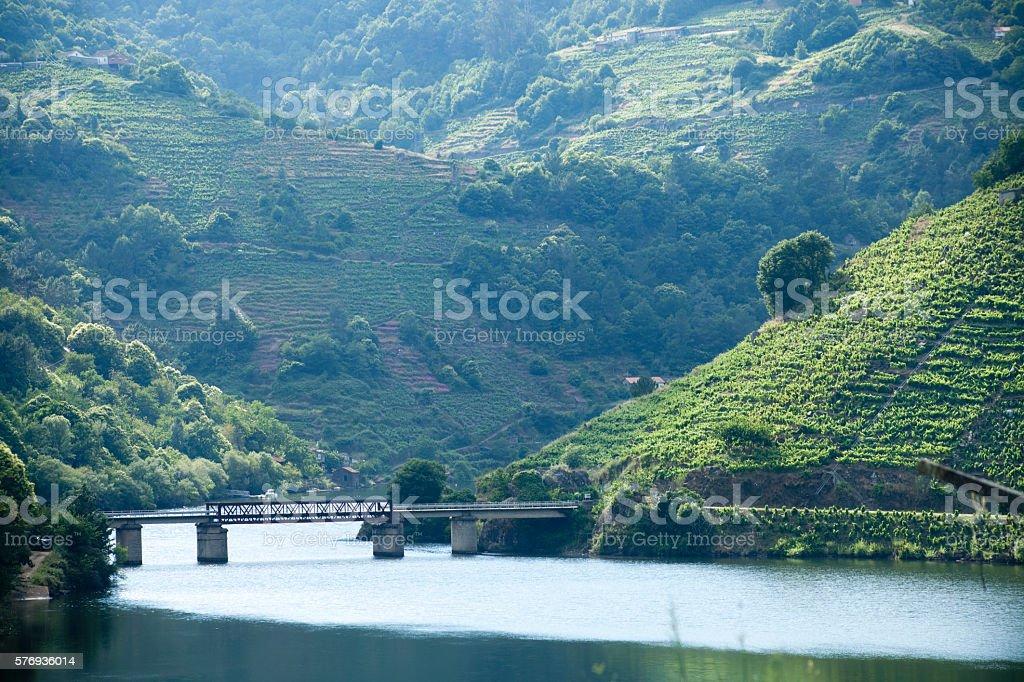 Ribeira sacra vineyards and river Miño, Galicia, Spain. stock photo