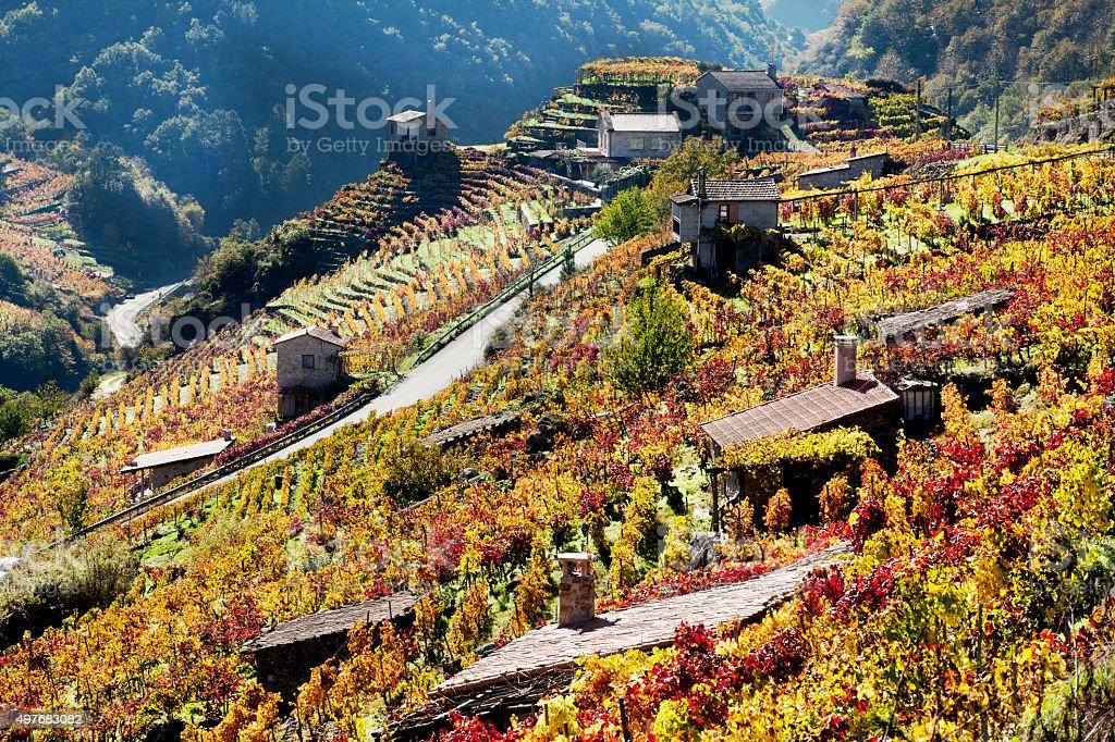 Ribeira sacra vineyards and small cellars in autumn, Galicia, Spain. stock photo