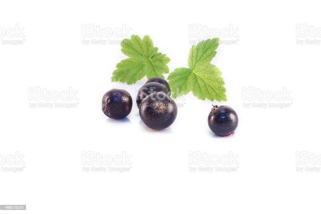 Ribes nigrum isolated stock photo