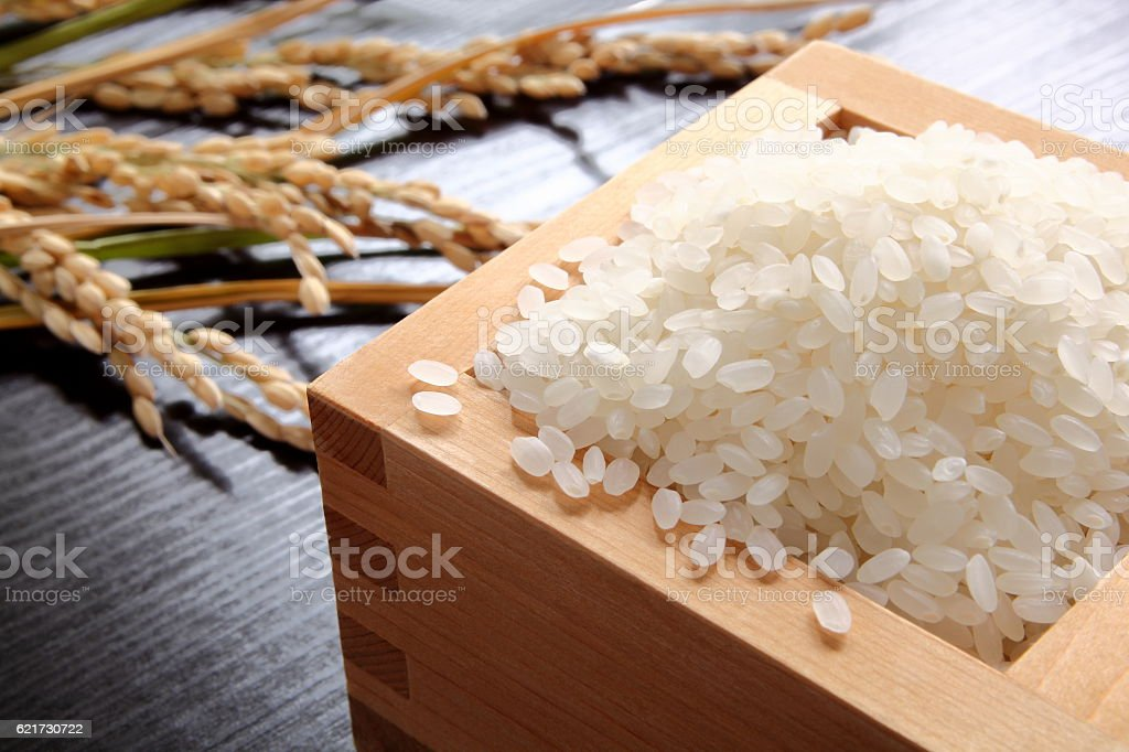 Rice and Oryza sativa,Japonica stock photo