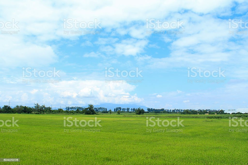 rice and sky stock photo