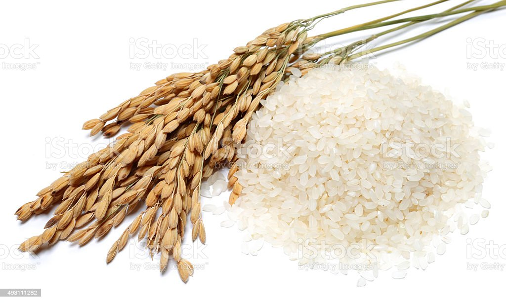 Rice and stalks stock photo