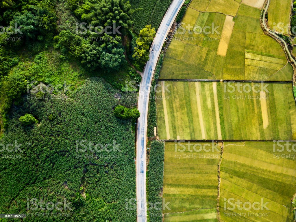 Rice and sugar cane fields of south China divided by road aerial view