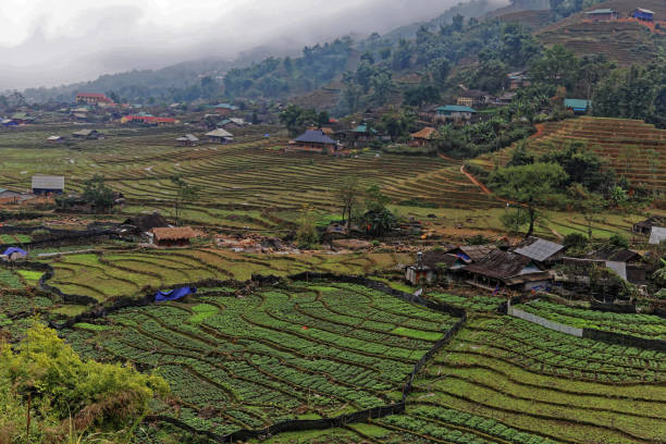 Rice and Vegetable cultivations in Giang Ta Chai - Muon Hoa Valley