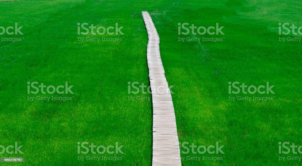 Rice farm green paddy and wooden bridge stock photo