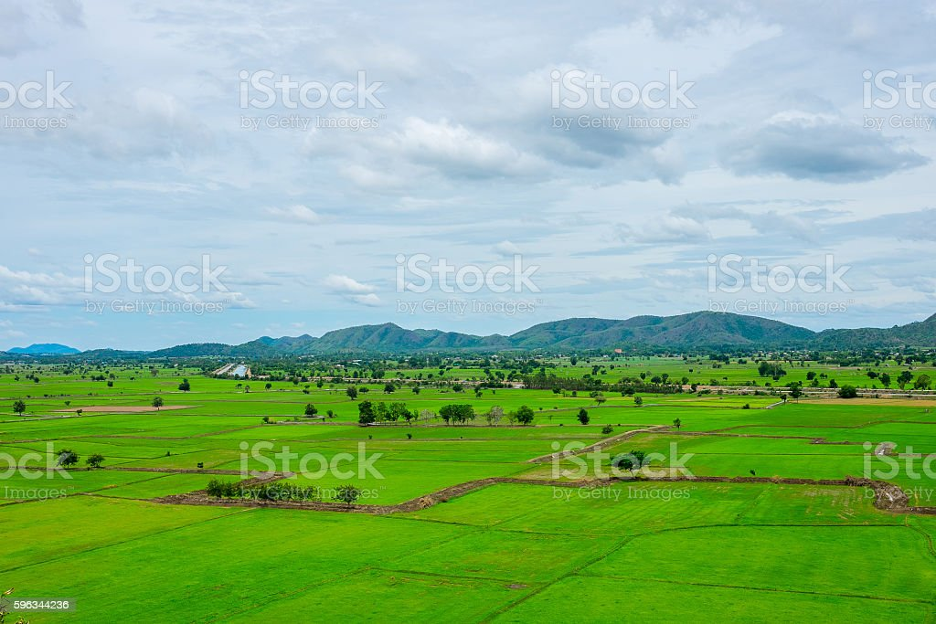 Rice farm in Thailand royalty-free stock photo