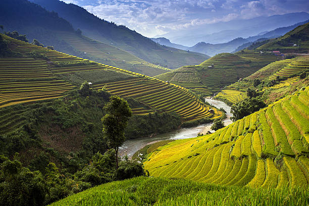 Rice Farm in Vietnam Rice Farm in Vietnam 2015, Mu Cang Chai. rice paddy stock pictures, royalty-free photos & images