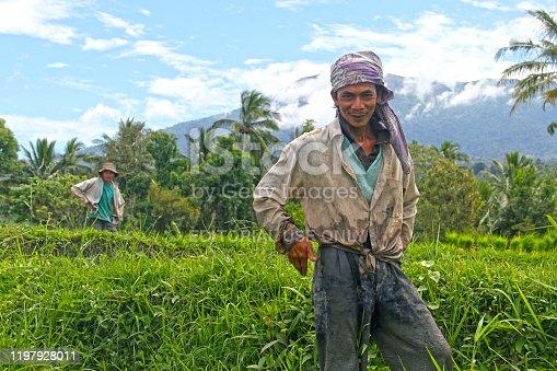 Bukittinggi, Indonesia - July 27, 2010. Two rice farmers in a rice field with one smiling in Bukittinggi, West Sumatra, Indonesia.