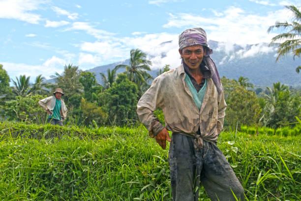 Rice farmers in indonesia picture id1197928011?b=1&k=6&m=1197928011&s=612x612&w=0&h=fwneow7gxrbu3zxpaxydxrbjvwe9xusczpfmmz1xxia=