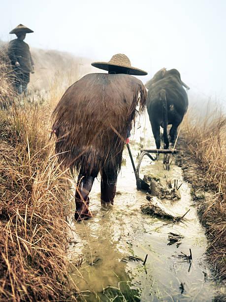 Rice farmers stock photo