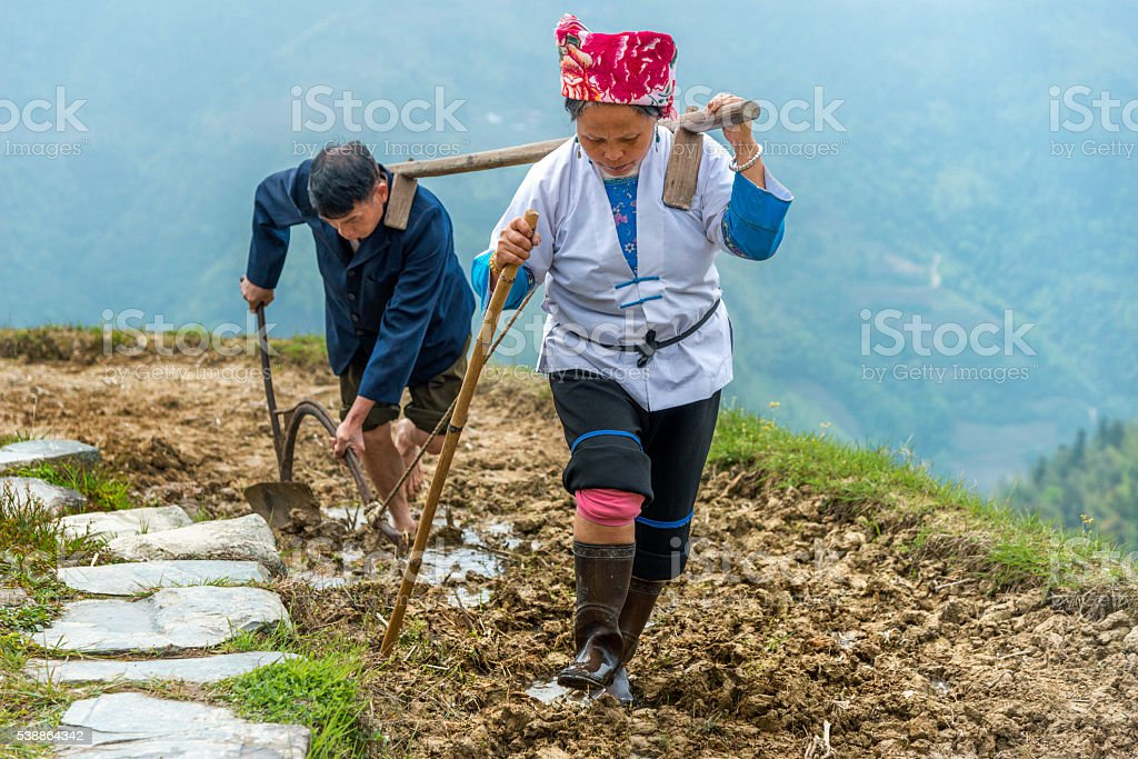 Rice farmers ploughing by hand stock photo