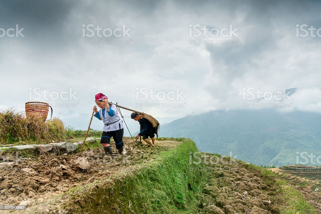 Rice farmers ploughing by hand under dramatic sky stock photo