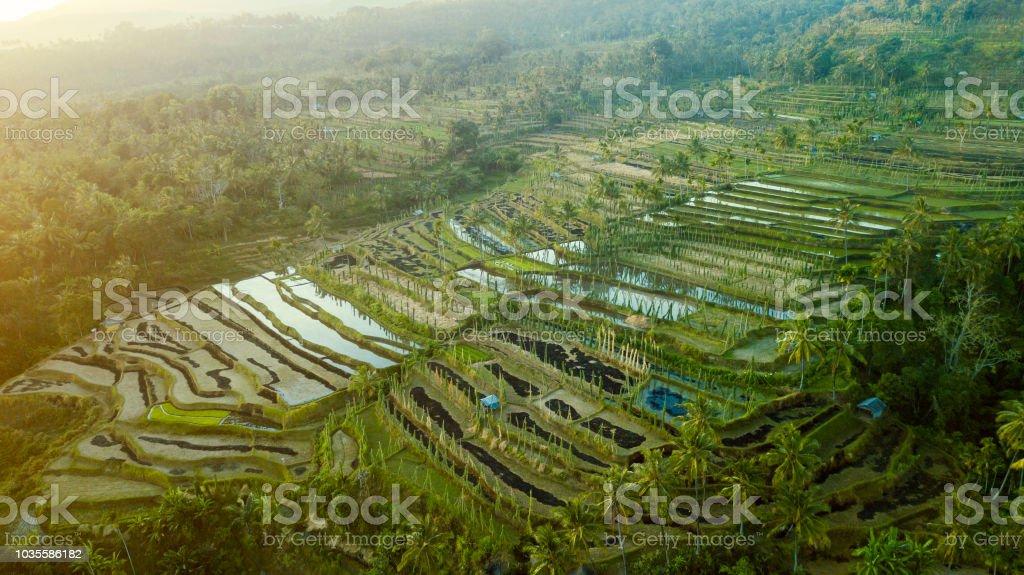 Tierras De Cultivo De Arroz Con El Sistema De Terraza En