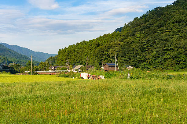 rice field and farm in japan countryside - satoyama scenery stock photos and pictures