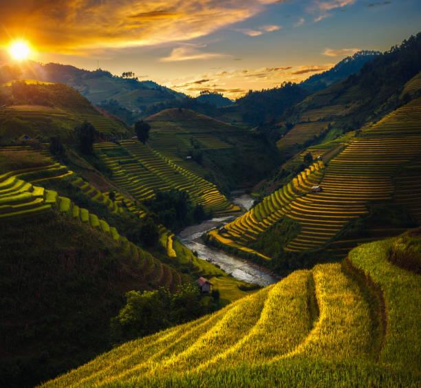 veld en rijst rijstvelden mu cang chai met zonsondergang en blauwe hemel - sawa stockfoto's en -beelden
