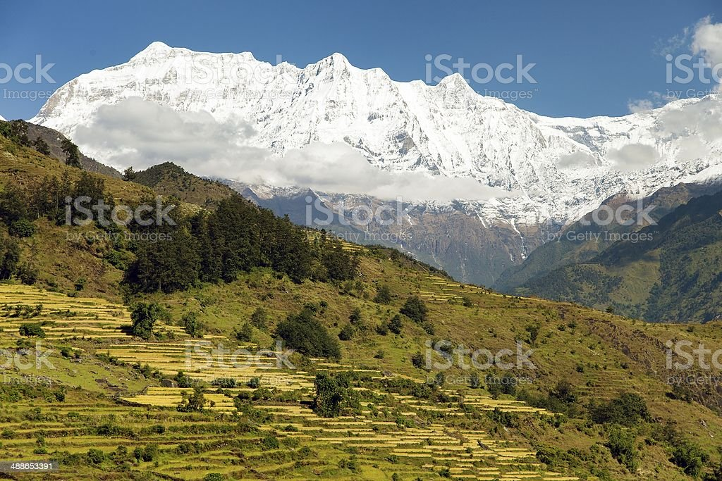 Rice field and snowy Himalayas mountain in Nepal stock photo