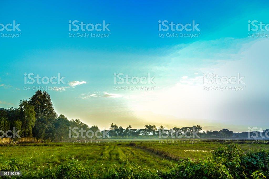 황혼에서 태양, 구름, 푸른 하늘, 쌀 필드 royalty-free 스톡 사진