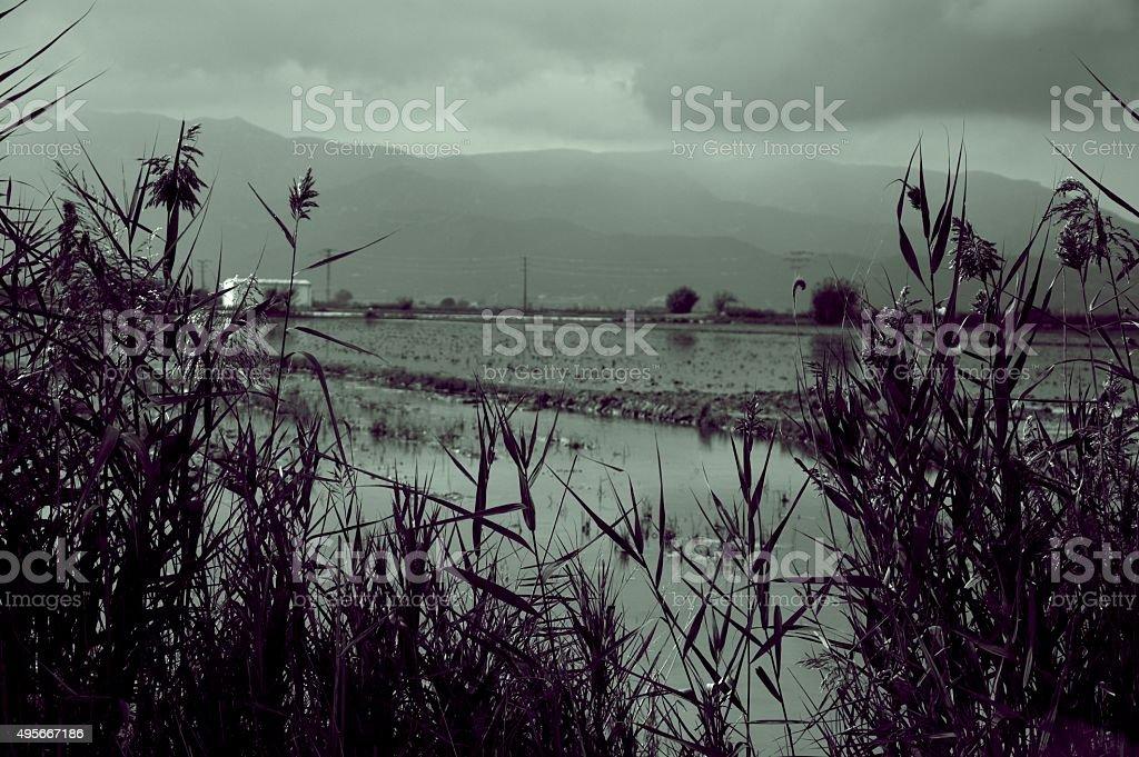Rice Field Catalonia Spain stock photo