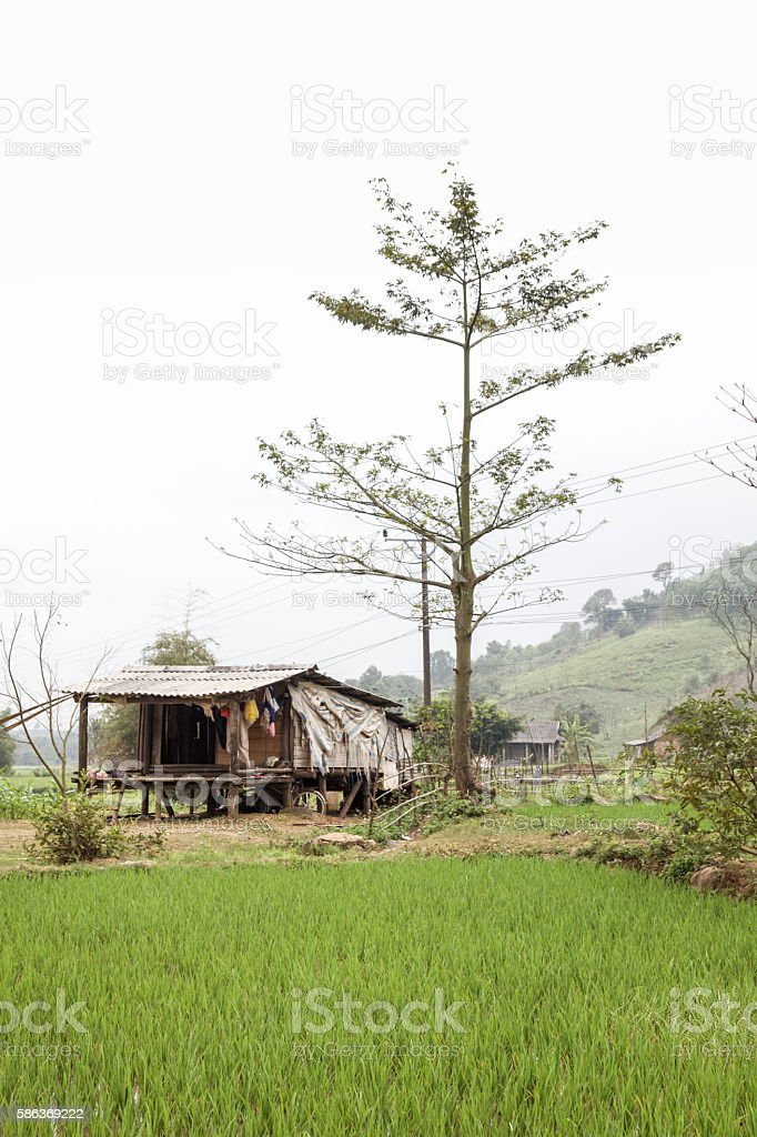 Rice field in central Vietnam stock photo