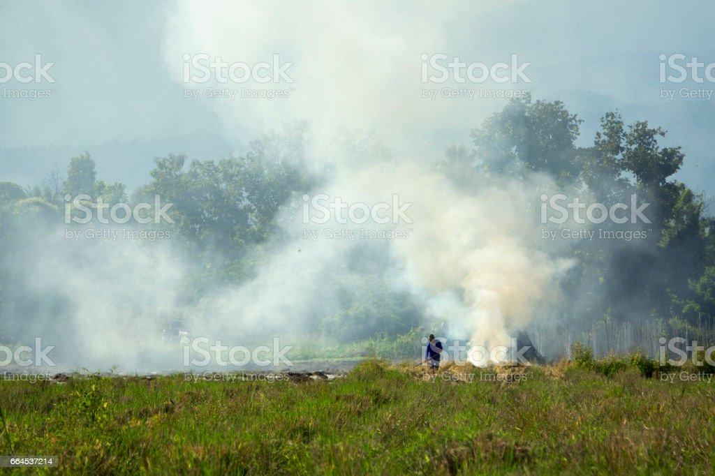 Rice Field in Chiangmai, Thailand royalty-free stock photo