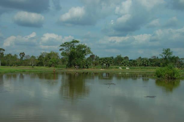 Reisfeld bei Siam Reap, Kambodscha – Foto