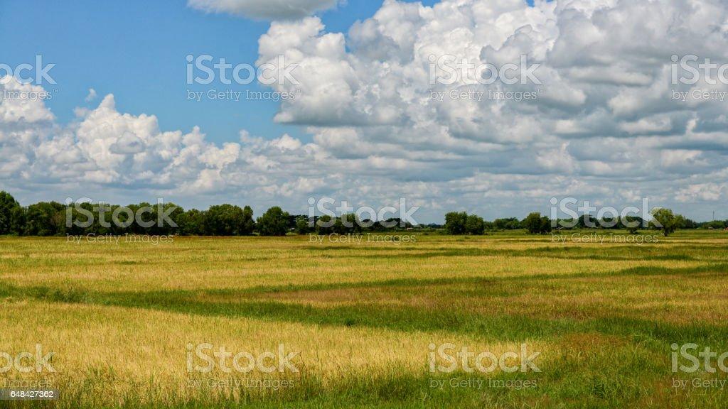 rice field of bago myanmar landscpae stock photo