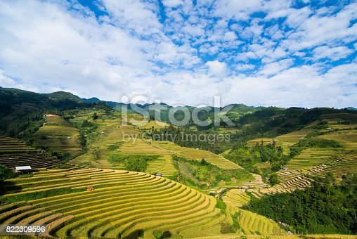 istock Rice field on terrace Mu Cang Chai Yen Bai,Vietnam 822309596