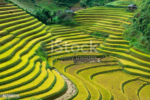 istock Rice field on terrace Mu Cang Chai Yen Bai,Vietnam 822309774
