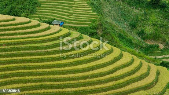 istock Rice field on terrace Mu Cang Chai Yen Bai,Vietnam 822309846