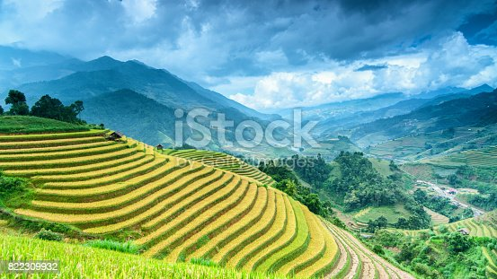 istock Rice field on terrace Mu Cang Chai Yen Bai,Vietnam 822309932