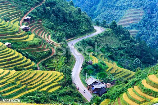 istock Rice field on terrace Mu Cang Chai Yen Bai,Vietnam 822310078
